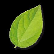foglia green carloforte